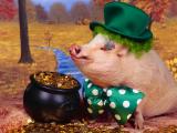 可爱金币猪