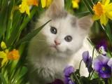花丛中的小猫咪