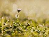 坚强的小雏菊