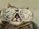 大眼镜花猫