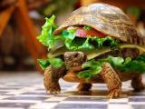 海龟汉堡包