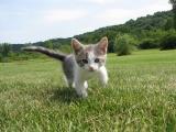 可爱萌猫咪