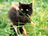 惊恐的小猫