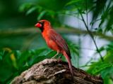 美丽的小鸟