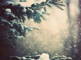 下雪的风景