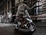 骑摩托车的大象