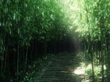 陽光下的綠色林地