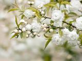 春天的花蕾