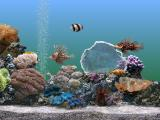 电脑屏保海底世界