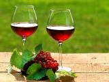 葡萄与美酒