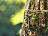 锁在树上的誓言