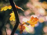 忧伤的秋天