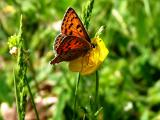 美丽的花蝴蝶