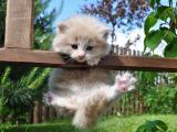 好玩的小猫