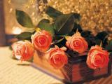 玫瑰代表我对你的爱