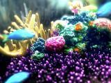 炫彩海底世界