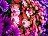 簇拥的鲜花