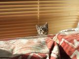 无处躲藏的猫