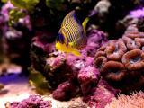 美丽的热带鱼