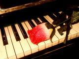 一个人的孤单情歌