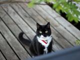 可爱的小黑猫