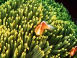 珊瑚丛中的美丽鱼儿