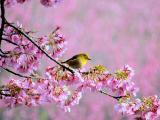 枝头小鸟的等待