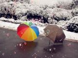 雪地里的雨伞