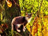 绿眼睛猫咪