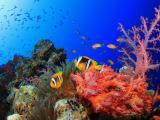 海底自由的鱼儿