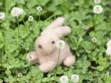 草丛里的鬃毛娃娃