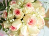 玫瑰代表我最真的爱