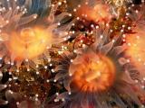 海底生物珊瑚