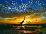 夕阳下的丹顶鹤