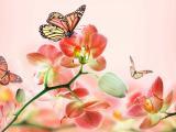 美丽花卉上的蝴蝶