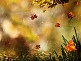 雨中的枫叶