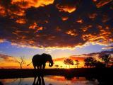 夕阳下的大象