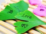 叶子的爱情