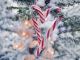 树枝上挂着的拐杖糖