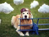 时尚宠物犬