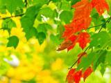 多彩的秋季