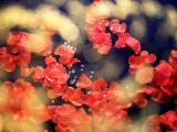 散落的红叶