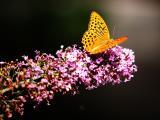 唯美花瓣蝴蝶