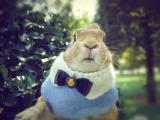 绅士小兔史大力