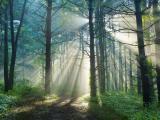 穿过树林的阳光
