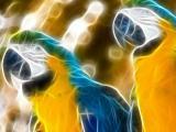 超酷动物光线鹦鹉