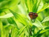 绿叶中的美丽蝴蝶