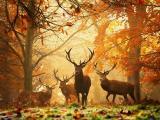 黄昏树下的麋鹿