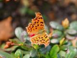 灵动的蝴蝶