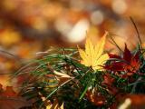 草丛中的落叶